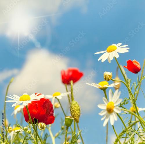 canvas print picture Sommerwiese mit Sonnenschein