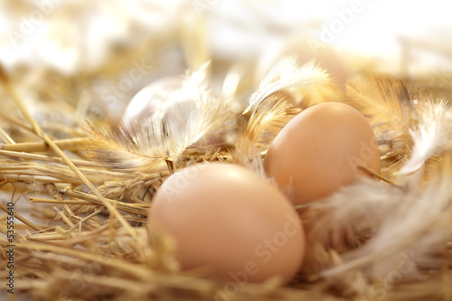 Deurstickers Egg fresh eggs in a nest