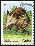 stamp printed by Cuba, shows Cuban solenodon, almiqui