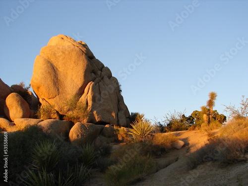 Fototapeten,usa,california,ca,joshua tree