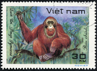 stamp printed in VIETNAM shows a African animal