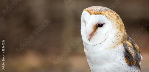 Aluminium Uil Barn Owl