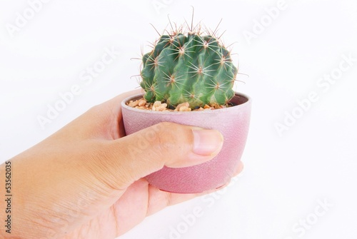 Cactus in a pot isolated on white background