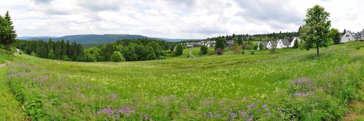 Bergwiese bei Masserberg, Thüringer Wald
