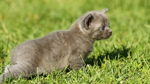 Kitten on the green grass