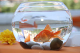 Goldfish  in a round aquarium.