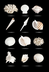 Seashells set.