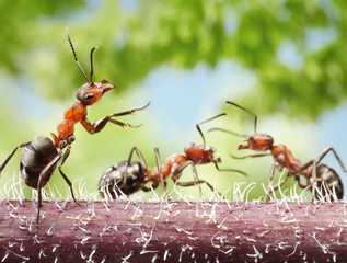 peacemaker, ant tales