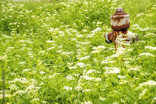 Hydrant in Blumenweise