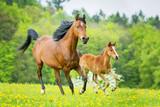 Mutterstute und Fohlen