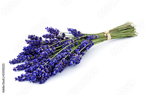 Lavender bouquet isolated