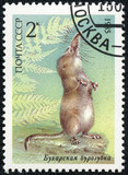 stamp printed in USSR shows a Pamir shrew