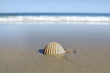 Shell at a beach