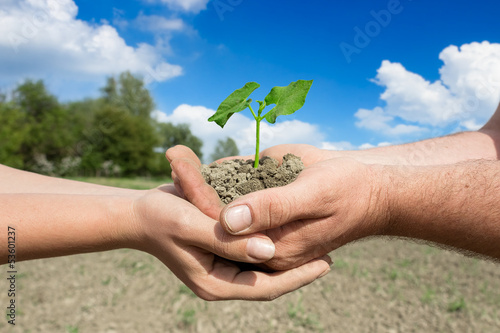Green plant in the two pair hands