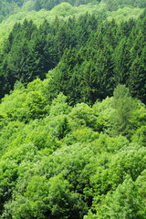 Green forests