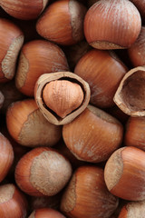 Hazelnuts in shells, full frame