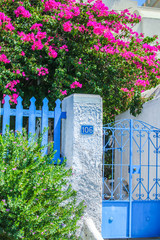 Traditional house and floral wall of bougainvillea in Fira the