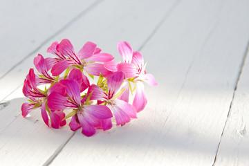 flor en fondo blanco de madera