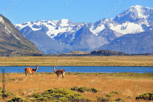 In the foreground are grazing guanaco
