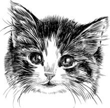 tête d'un chaton