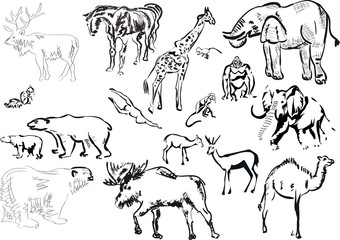 collection of isolated animals sketches