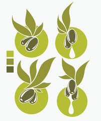 fresh and healthy olive oil symbols