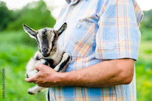 little goat on hands