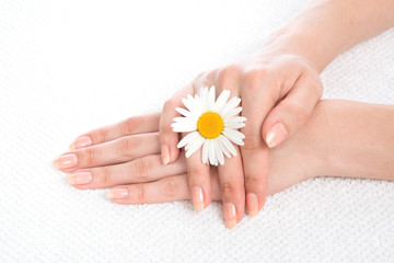 woman hands french manicure with camomile flower on fresh towel