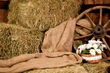 Interior rustic farm: hay wheel and daisy in basket.