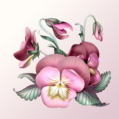bunch of vintage pink pansy flowers, illustration