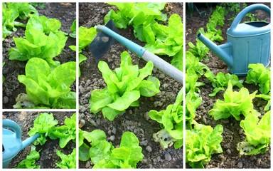 cultiver ses salades, composition
