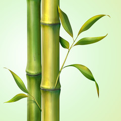 bamboo stem and leaves illustration
