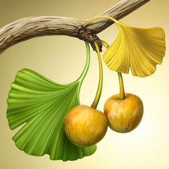 illustration of ginkgo tree branch with fruits