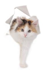 Kätzchen schaut durch Papier