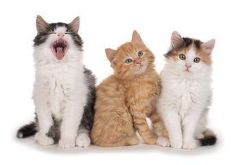 drei Kätzchen nebeneinander- three little kitten