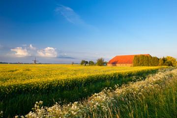 farm, windmill and canola fields under blue sky