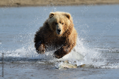 Aluminium Dragen Grizzly Bear jumping at fish
