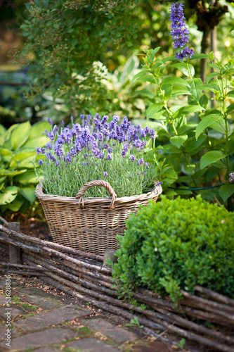 Garden with lavender