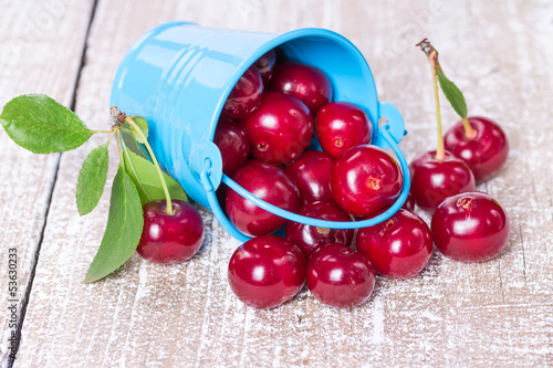 Ripe cherries in a bucket