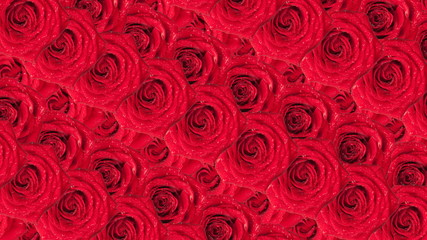 Roses wallpaper. Animated background.