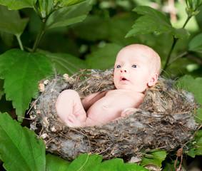 Newborn baby in a humingbird nest