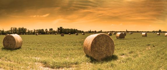 Balla cilindrica di fieno in un campo coltivato al tramonto
