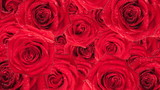 Beautiful roses wallpaper. Animated background.