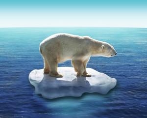 Ours Polaire / Fonte des glaces