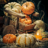 Pumpkins still life