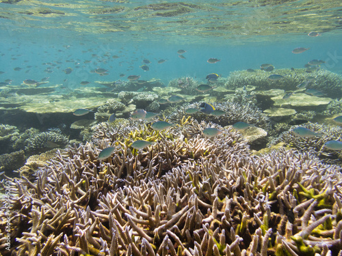 Scenery of the coral reef