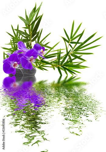 composition bambou orchidée galet