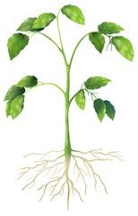 Green Plant