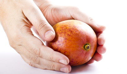 Hold hands mango fruit