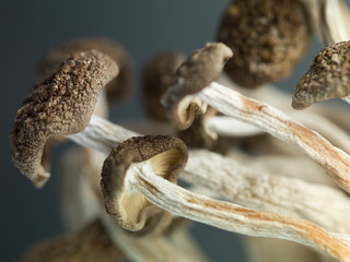 concept detailed image showing delicate enoki mushrooms
